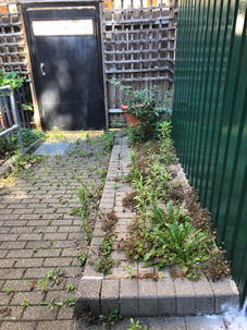 Weeds growing out from between the bricks in a raised paving area.