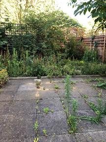 Weeds growing between paving slabs and an unkempt patch of garden.